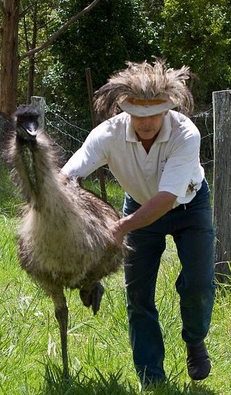 emu catching